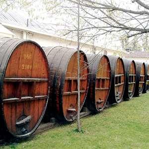 Winery Tour - Vina Concha y Toro