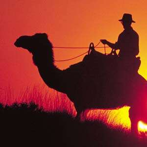 Camel Ride to Sunrise
