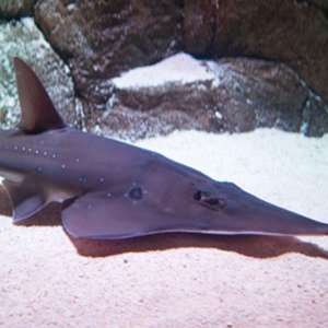 Sydney Aquarium & Wildlife World Combo