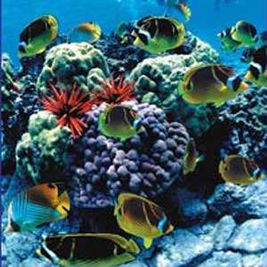 Snorkeling & Dolphin Cruise - Body Glove Cruises