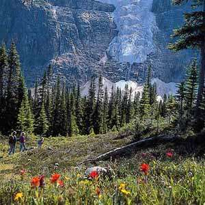 Mount Edith Cavell Nature Walk