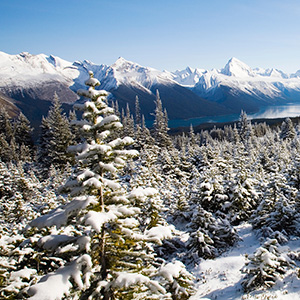 Canadian Rockies Winter Adventure