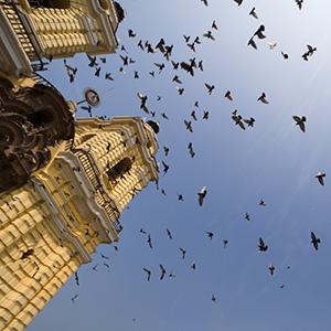 Lima City Stay (ILL)