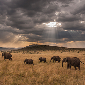 East Africa Private Safari (IQH)
