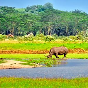 East Africa Private Safari with Lake Nakuru National Park Area