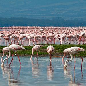East Africa Private Safari with Nairobi & Lake Nakuru National Park Area