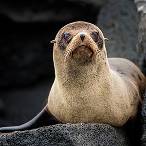 In The Footsteps Of Darwin On Santa Cruz & Isabela Islands (IST)