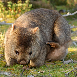 Australian Safari
