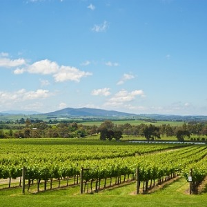 Wines of Australia & New Zealand with the Great Barrier Reef