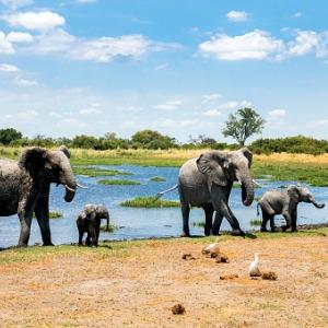 Splendors of South Africa & Victoria Falls with Chobe National Park & Maasai Mara