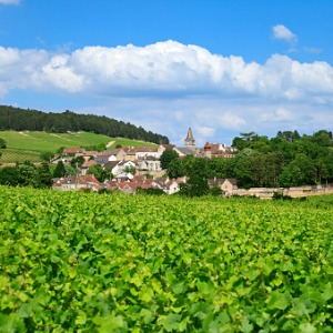 Burgundy & Provence with 3 Nights Venice & 3 Nights Rome for Wine Lovers