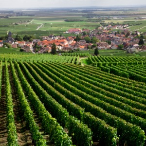Burgundy & Provence with 3 Nights Venice & 3 Nights Rome – Northbound
