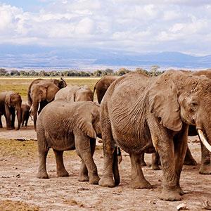 On Safari in Kenya with Dubai