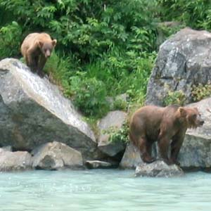 Grand Alaskan Adventure with Alaska Cruise