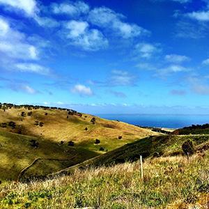 Wines of Australia & New Zealand