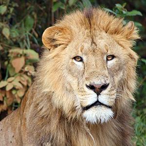 Kenya & Tanzania The Safari Experience with Nairobi