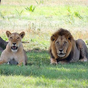 Kenya & Tanzania The Safari Experience with Nairobi & Zanzibar