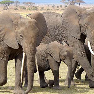 Kenya: A Classic Safari with Nairobi & Maasai Mara Extended Stay