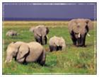 Africa Travel Information