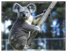 Australia Travel Information