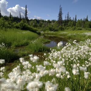Spectacular Alaska! (AJ)