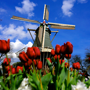 Keukenhof is the worlds largest flower garden and is known as the Garden of Europe