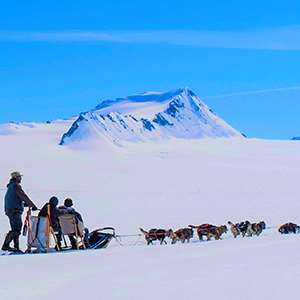 Colony Glacier Dogsledding and Flightseeing Adventure