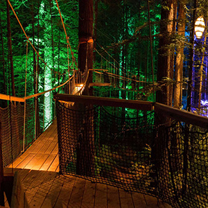 Redwoods TreeWalk at Night