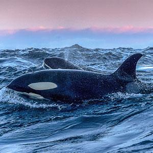 Skjervøy Whale-Watching Cruise
