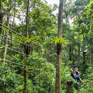 Jungle Surfing Zipline Adventure