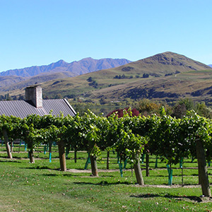 Queenstown Wine Trail Tour