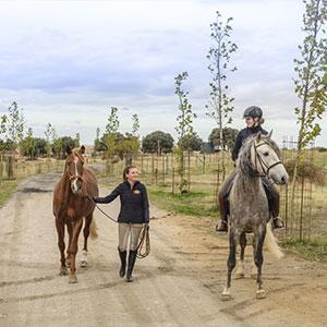 Wonders of Segovia: Aqueduct, Alcázar & Horseback Adventure