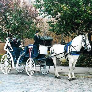Philadelphia Carriage Tour