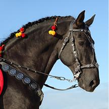 DELVE: Horse Around