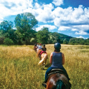 The Vineyards of Tuscany by Horseback