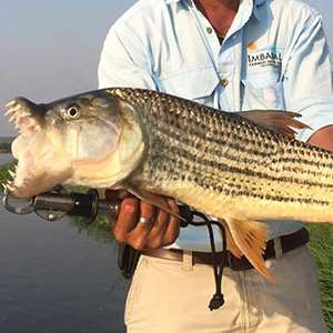 Fishing the Zambezi River