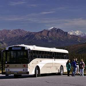 Denali National Park Sightseeing