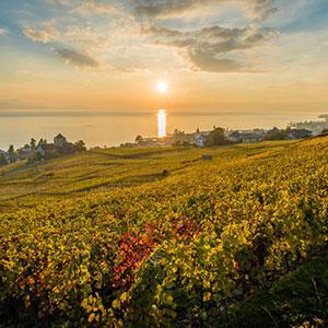 Lavaux Wine Tasting