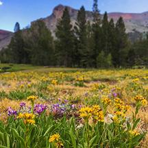 TREK: Yosemite, Naturally