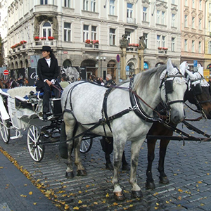 Celebration Package: Prague Dinner Cruise & Carriage
