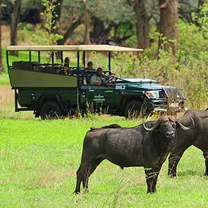 Game Drive in Victoria Falls Private Game Reserve