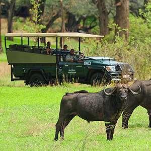 Game Drive in Victoria Falls Private Game Reserve