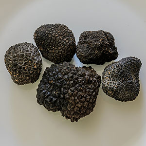 """Black Diamond"" Truffle Encounter"