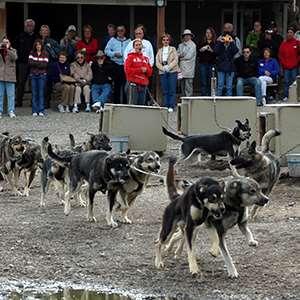 Sled Dog Kennel Tour