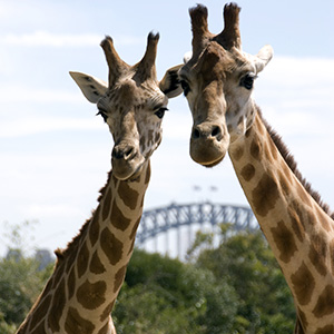 Taronga Zoo - General Entry
