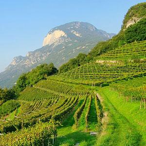 Merano Wine Experience