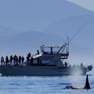 Marine and Wildlife Whale Watching