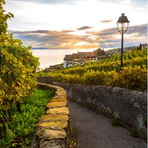 SIP: Mountains Soar & Wines Pour