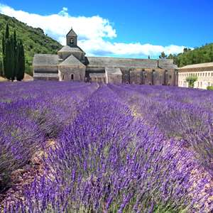 Château Grignan & the Lavender Fields of Provence