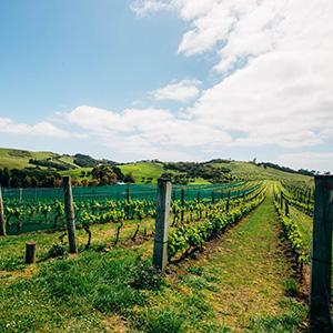 Explore Beautiful Waiheke Island